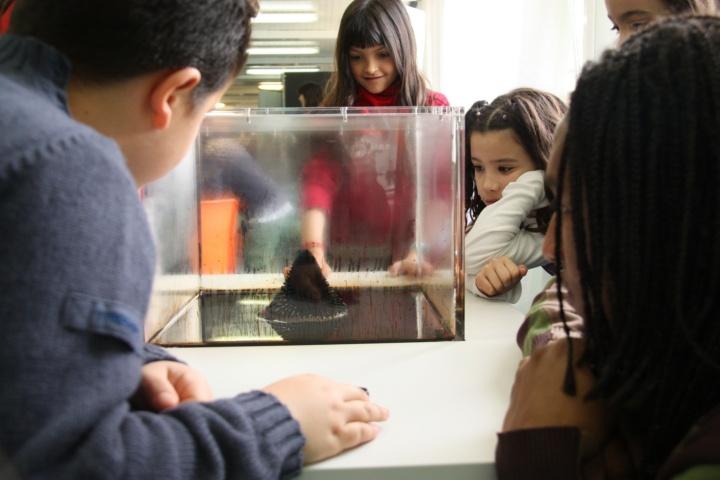 Kinder entdecken die wundersamen Eigenschaften von Ferrofluid. (c) Antonio Zamura, UAB